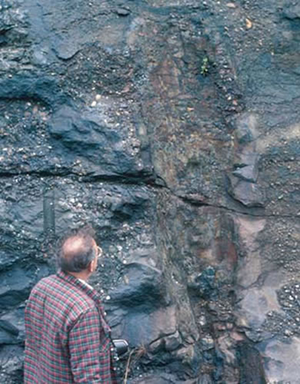 Giant Devonian fossil
