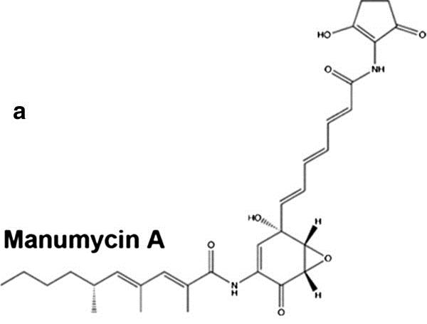 Manumycin A (farnesyltransferase inhibitor)