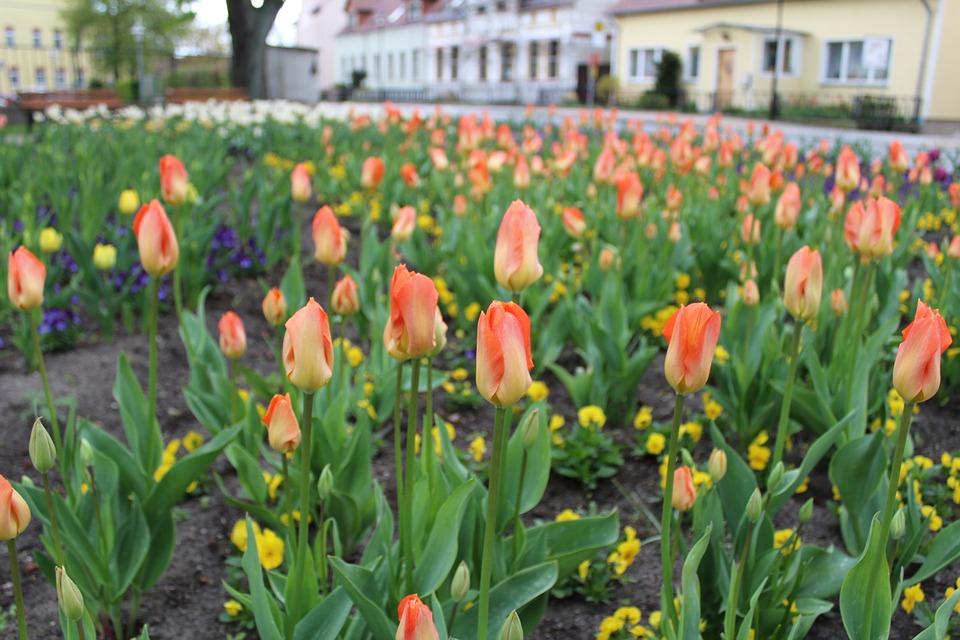Spring-Flowers-Flower-Bed-Spring-Flowers-Tulips